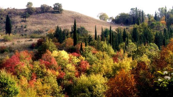 Tavolozza d'autunno - Bagni san filippo (950 clic)