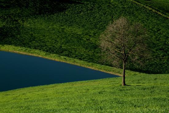 Agreste metafisica; - Castelvetro di modena (600 clic)