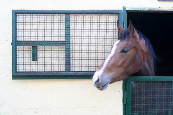 Maneggio di cavalli - Niscemi (5987 clic)