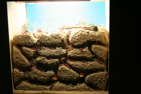 Museo Didattico di Storia Naturale - Niscemi (3803 clic)