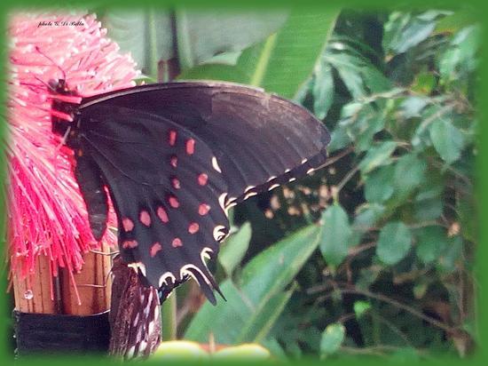 il giardino delle farfalle a Palazzo Riso - Palermo (178 clic)