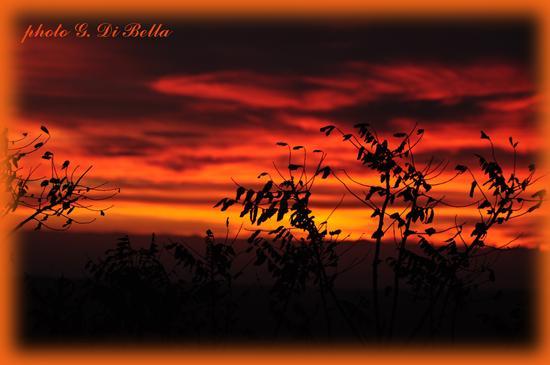 rosso di sera....!!!!tramonto in cont.da Adragna - Sambuca di sicilia (446 clic)