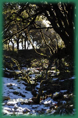 Gli alberi a led.....!!!! - Sambuca di sicilia (806 clic)