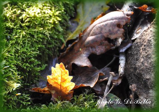 foglie dormienti....! - Sambuca di sicilia (856 clic)