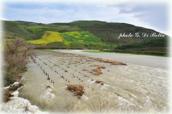 straripamento del fiume Belice....!!!!!!! - Poggioreale (439 clic)