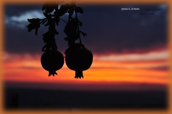 tramonto in adragna con melograni in controluce - Sambuca di sicilia (985 clic)
