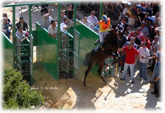 La corsa dei cavalli a Sambuca di Sicilia. (611 clic)