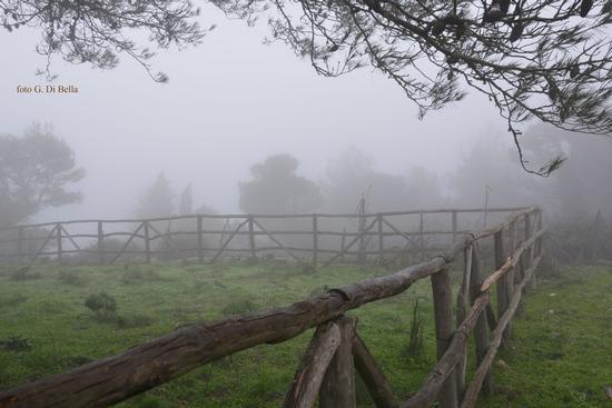 nebbia sul monte Genuardo - Sambuca di sicilia (1342 clic)