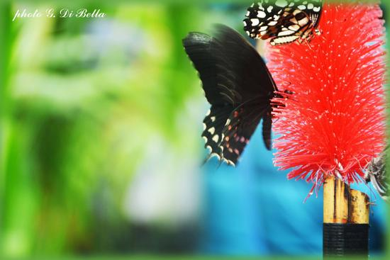 il giardino delle farfalle a Palazzo Riso  - Palermo (126 clic)