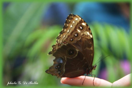 il giardino delle farfalle a palazzo Riso - Palermo (157 clic)