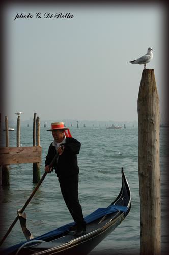 IL gondoliere....!!! - Venezia (443 clic)