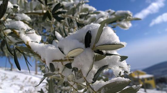 Neve incastonata - FOGGIA - inserita il 09-Feb-15