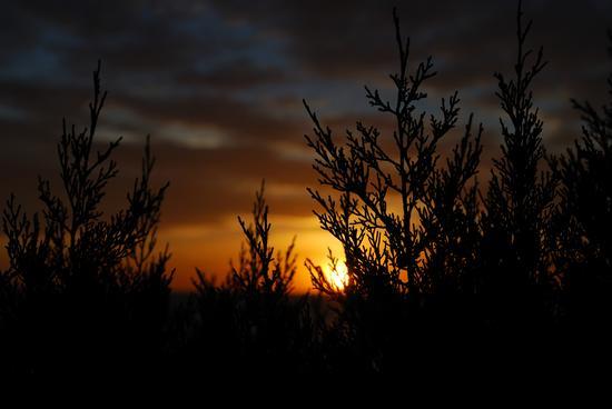 Si vela l'alba - Chia (787 clic)