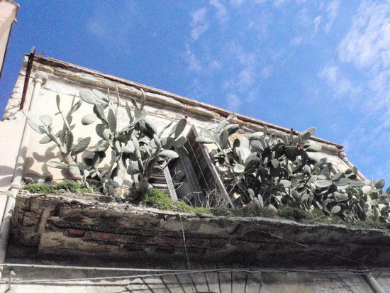 Balcone Siciliano     - Bagheria (1232 clic)