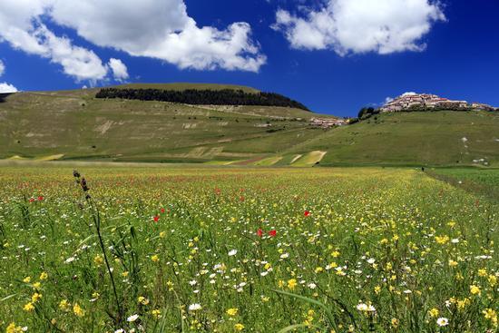 pre fioriture - Castelluccio (542 clic)