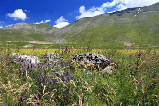 pre fioriture - Castelluccio (503 clic)
