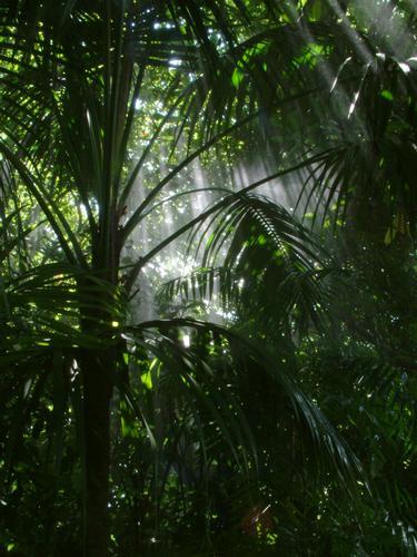 angolo di foresta pluviale a Villa Carlotta - Bellagio (457 clic)