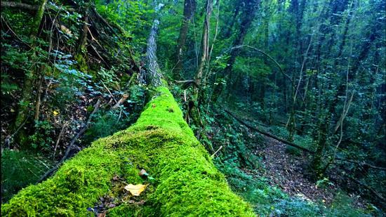 L'albero caduto  - Foligno (695 clic)