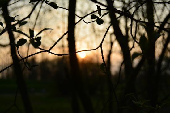 Un tramonto nascosto dalla natura - Cremona (307 clic)