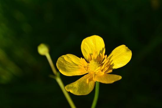Periferia cremonese, Fiore in macro (190 clic)