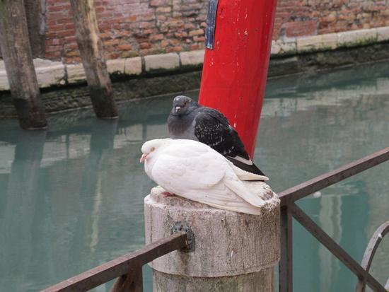 INNAMORATI - Venezia (2432 clic)