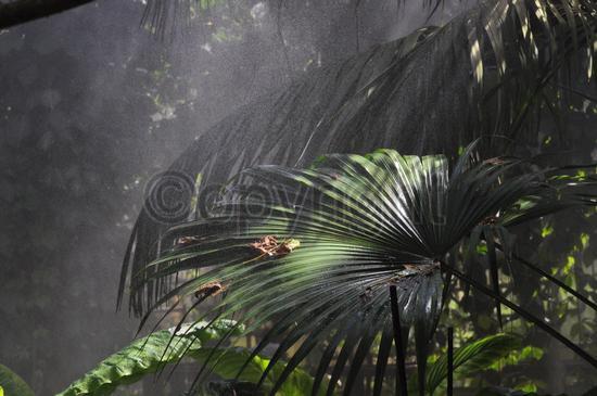 Foresta pluviale ... a Bergamo  (497 clic)