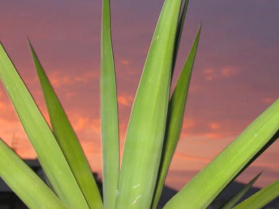 tramonto in terrazza - Palermo (3060 clic)