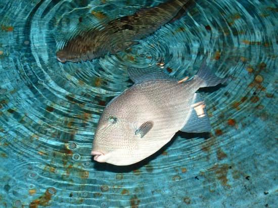 Acquario di Messina (3443 clic)