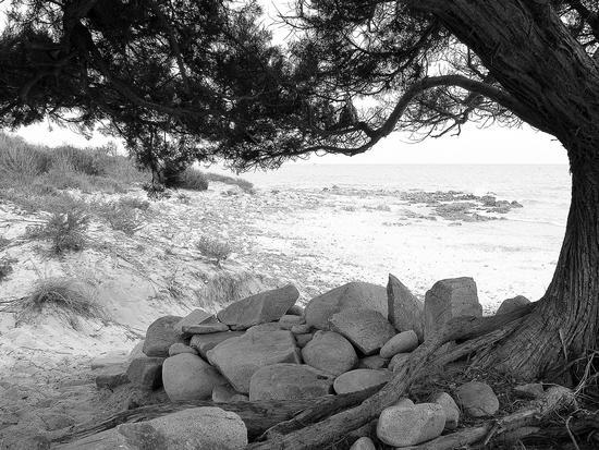 travolti dal destino - Bidderosa (2494 clic)