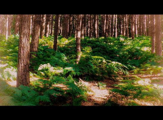 nel bosco - Sambuca pistoiese (2097 clic)