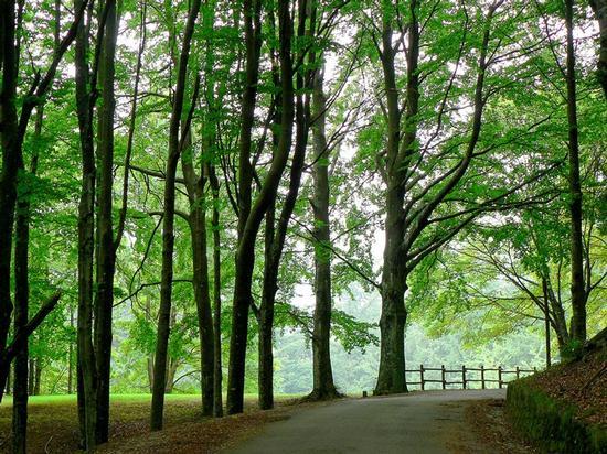 strada nel bosco - Sambuca pistoiese (4440 clic)