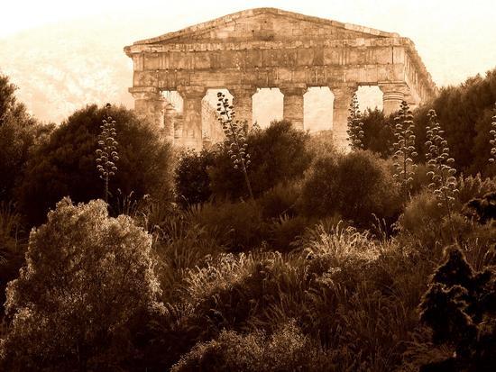 tempio di Segesta (3981 clic)