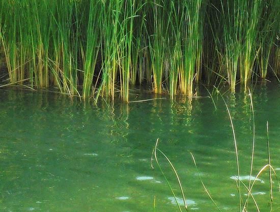 sfumature - Lago nicoletti (2533 clic)