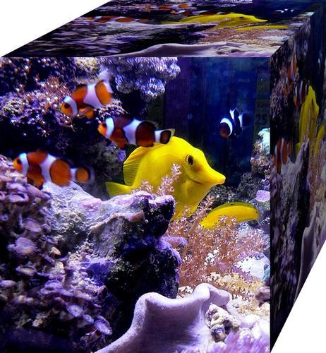 pesce smile - Pistoia (2786 clic)