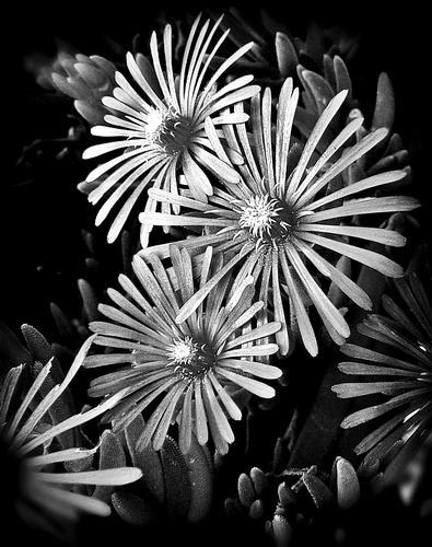 black/white (1236 clic)
