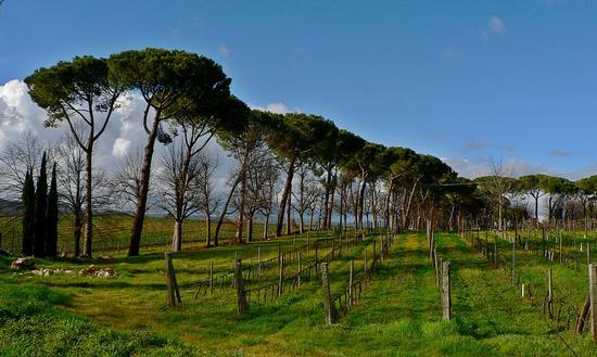 nei colli del Morellino - Scansano (1290 clic)
