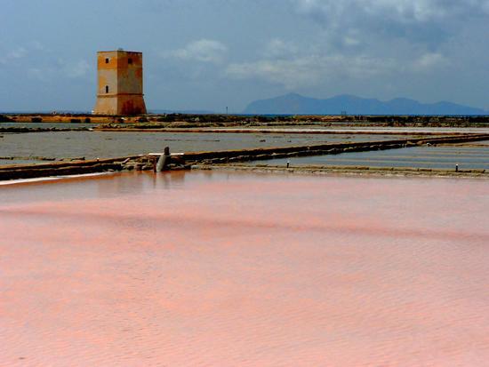 rosa delle saline... - Saline di trapani (3029 clic)