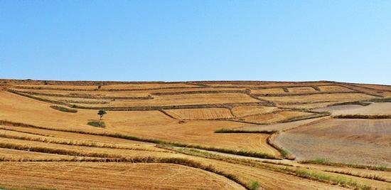 colline di Gesico - Cagliari (2539 clic)