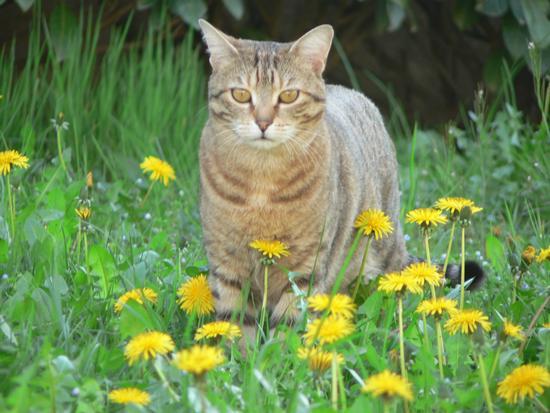la tigre di Casale - Pistoia (2596 clic)