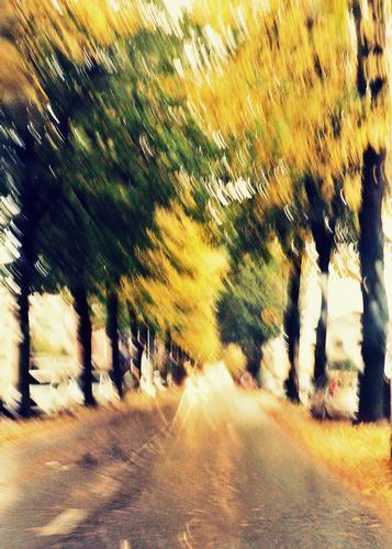 11/11/2012 una domenica di pioggia! (983 clic)