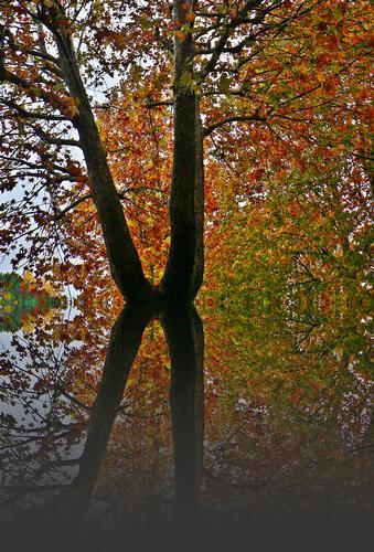 autunno a modo mio (1698 clic)