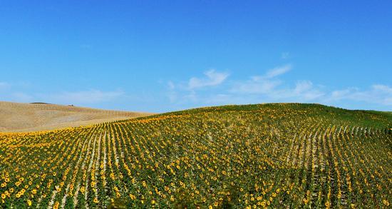 dolci colline - Saturnia (2593 clic)