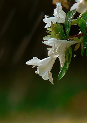 profilo di fiori - PISTOIA - inserita il 31-Jul-12
