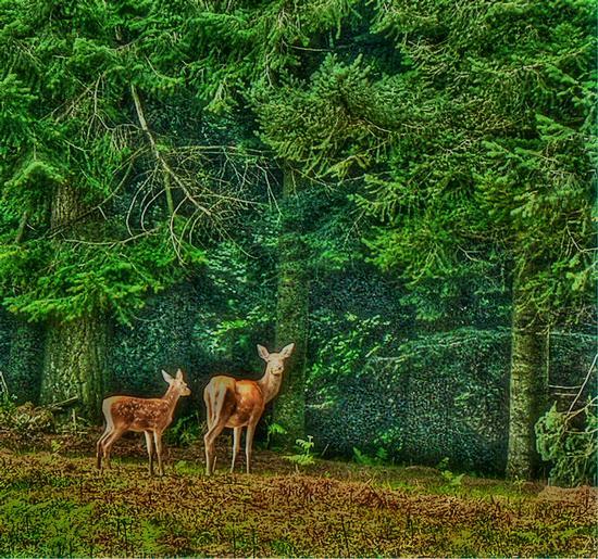 il bosco (1636 clic)
