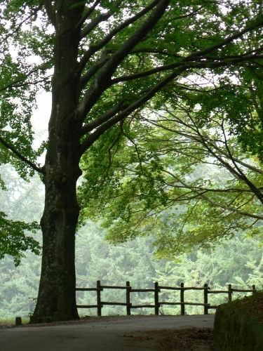 riserva naturale Acquerino - Sambuca pistoiese (3348 clic)