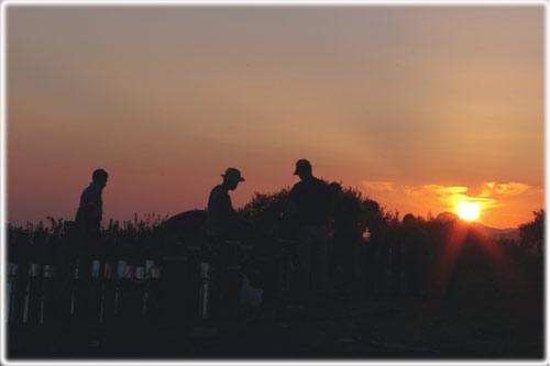 Ke fatica  lavorare al tramonto - Calamonaci (2937 clic)