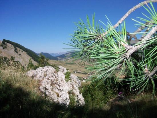 Vista dalla pineta - Pescocostanzo (8060 clic)