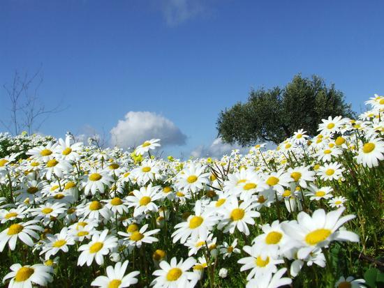 Primavera in arrivo - Montevago (3202 clic)