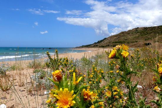 Spiaggia delle Solette (Porto Palo Menfi) (4672 clic)