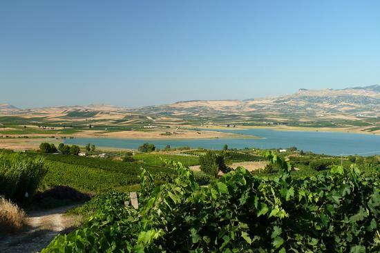 Nei pressi del lago arancio - Sambuca di sicilia (3092 clic)